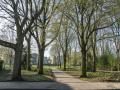 190329-Van-Nispenpark-Begin-situatie-112