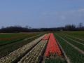 200402-bloemenvelden-Bert-4