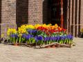 200411-bloemen-bij-kerken107