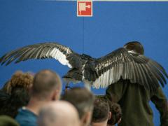 191228-roofvogelshow154