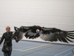 191228-roofvogelshow159