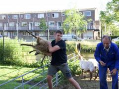 210624-schapenscheren-135