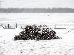 Hillegom-in-sneeuw104