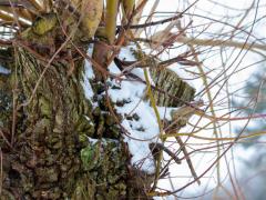 Hillegom-in-sneeuw110