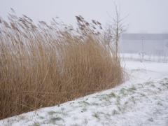 Hillegom-in-sneeuw121