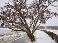 Hillegom-in-sneeuw122