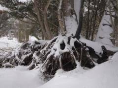 Hillegom-in-sneeuw131