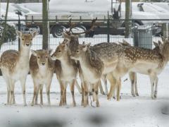Hillegom-in-sneeuw145