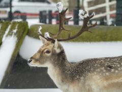 Hillegom-in-sneeuw146