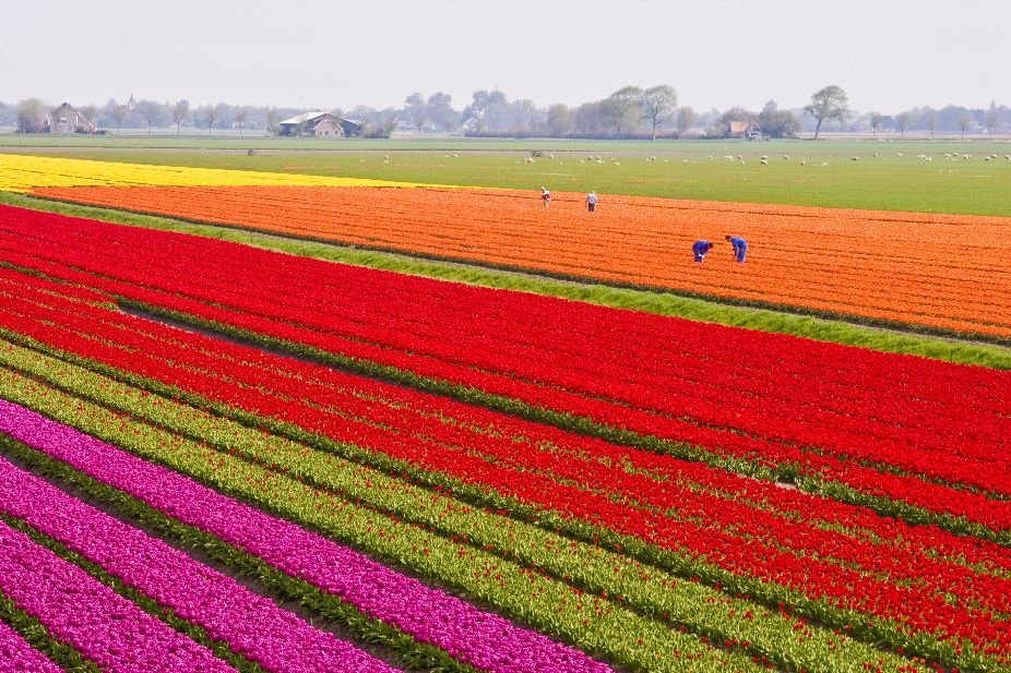 Bloembollen- en vaste plantensector zet proces van verduurzamen in