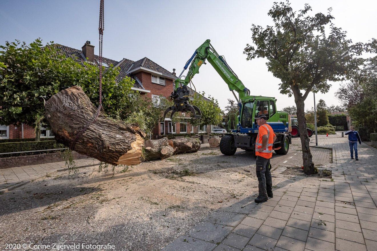 Omgevallen boom over huizen getild