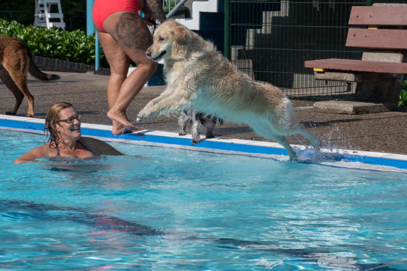 Spetter spatter spater de honden in het water